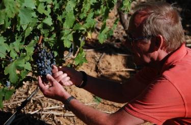 De dejlige druer
